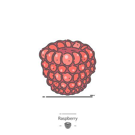 Raspberry - Line color icon 免版税图像 - 126180333