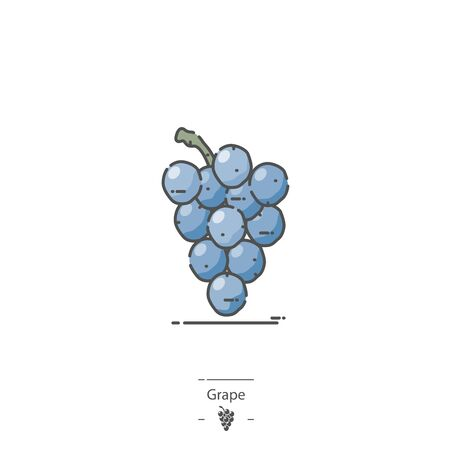 Blue Grapes - Line color icon Illustration