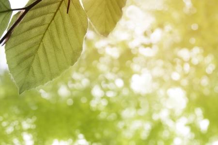 spring leafes