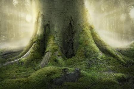 오래 된 나무의 뿌리 스톡 콘텐츠
