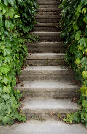 old stone stairs surrounded by ivy
