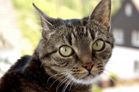 house cat portrait Stock Photo