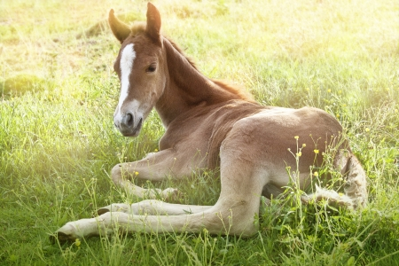 foal in the morning grass