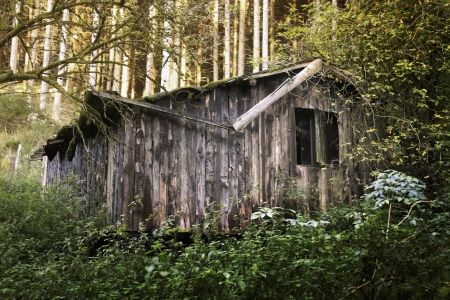 old cabin in the forest