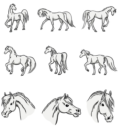 collection of walking horses   portraits Illustration