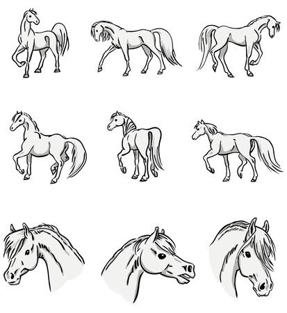 raccolta di ritratti di cavalli a piedi