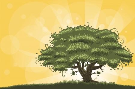 big tree: big oak in the morning light