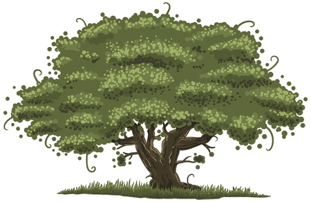 illustration of an old oak tree Illustration