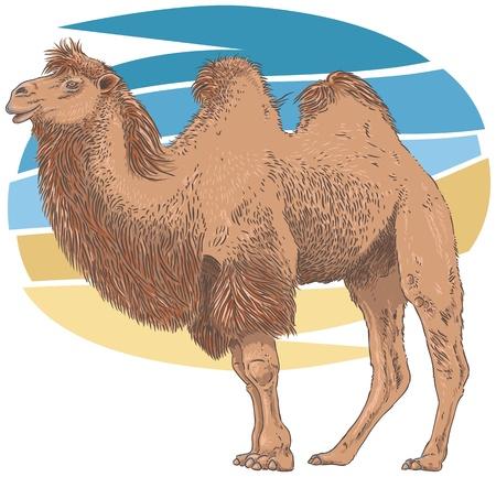 Camel Vector Illustration Illustration