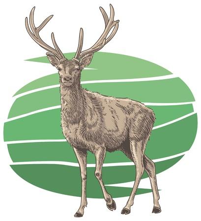Red Deer Vector Illustration Stock Vector - 18098386