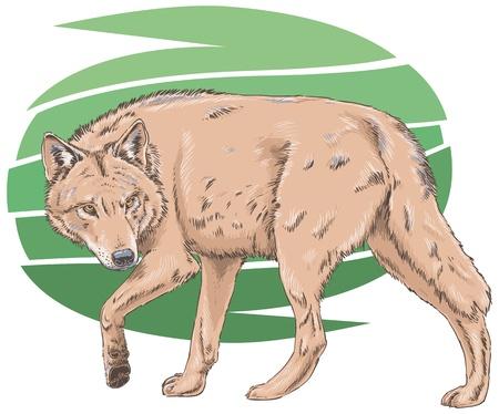 Lupo illustrazione vettoriale