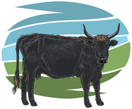 Aurochs (Bos Primigenius) Vector Illustration