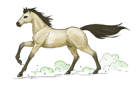 illustration of a galloping buckskin horse Stock Photo