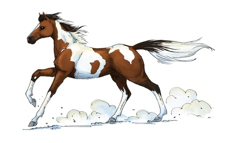 illustration of a galloping pinto horse