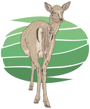 Red Deer Vector Illustration