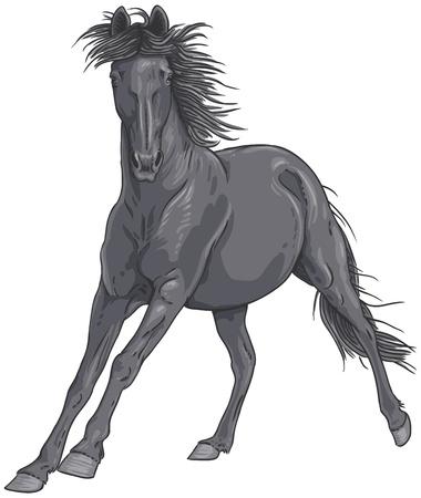 Isolata nero cavallo al galoppo illustrazione Vettoriali