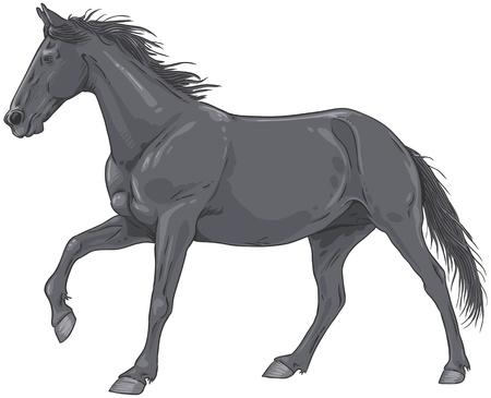 Illustrazione di un galoppo isolato cavallo nero