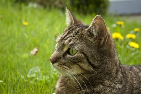 casa del gatto ritratto in erba di primavera