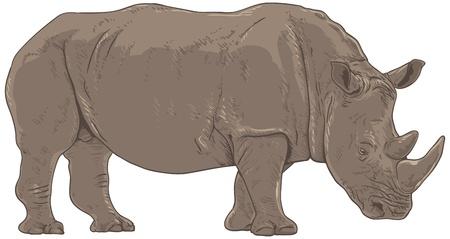 big five: Rhino Isolated  Illustration