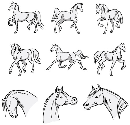 trotando: Trote caballos �rabes