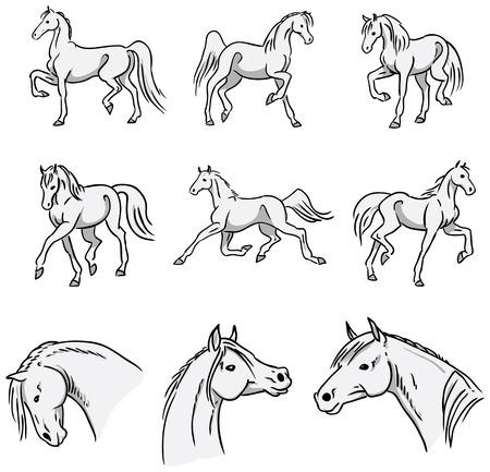 trotting: Trotting Arabian Horses