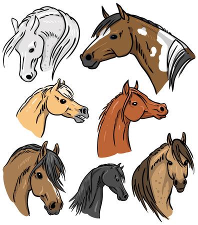 pinto: Horse Portrait Collection