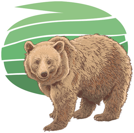 Kodiak Bear Vector Illustration Illustration