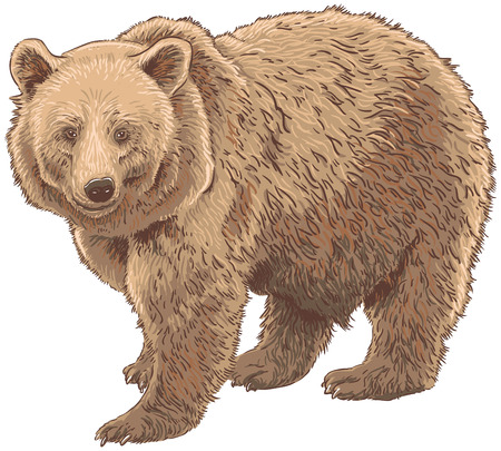 kodiak: Kodiak Bear Isolated Vector Illustration