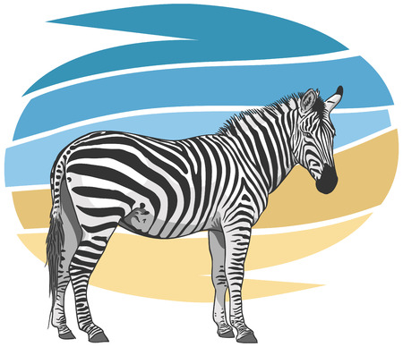 plains: Plains Zebra Illustration