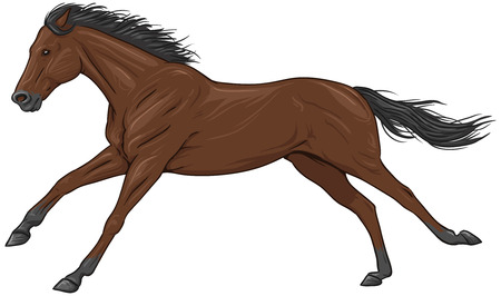 racehorse: Isolated galloping brown horse Illustration