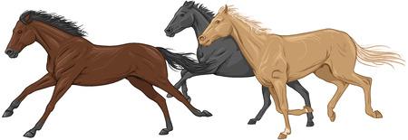 Tre isolati cavalli al galoppo