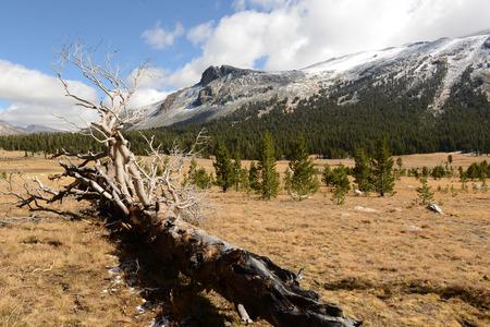 Vue de paysage de paysage du parc national de Yosemite Banque d'images - 85175875