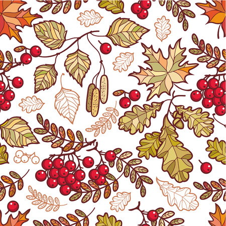 mountain ash: Autumn leaves. Vector drawing on white background. Autumn background. Birch. Maple. Rowan. Oak. Mountain ash. Vector elements isolated. Outline drawing. Template for a designer. Seamless pattern.