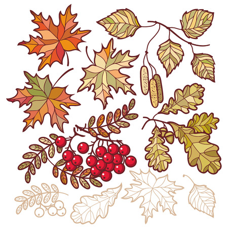 background herfst: Autumn leaves. Vector drawing on white background. Icons. Autumn background. Birch. Maple. Rowan. Oak. The tablet. Mountain ash. Banner. Vector elements isolated. Outline drawing. Template for a designer Stock Illustratie