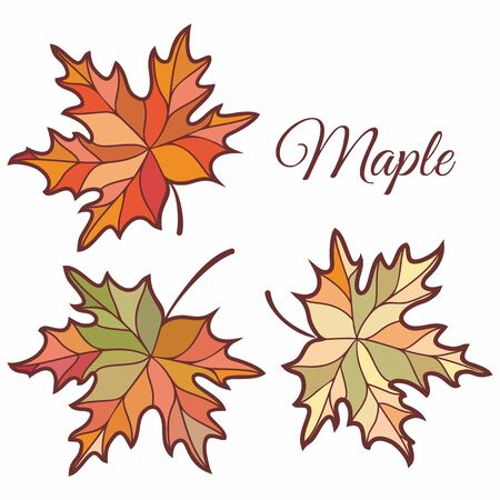 Maple leaves in stained illustration. Maple leaves. Autumn design. Forest themes. Autumn isolated leaf. Maple leaves autumn 版權商用圖片 - 130232893