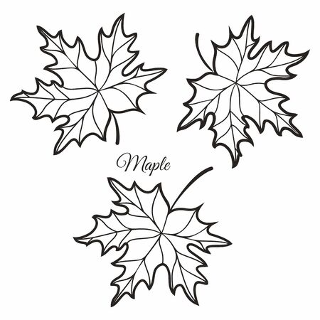 Maple leaves in stained illustration. Maple leaves. Autumn design. Forest themes. Autumn isolated leaf. Maple leaves autumn Standard-Bild - 130232890