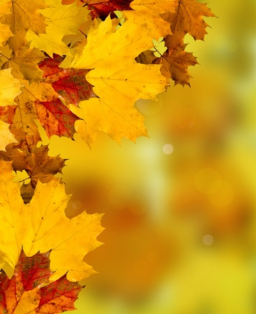 Abstract Background Composition - Autumn Leaves Stock Photo