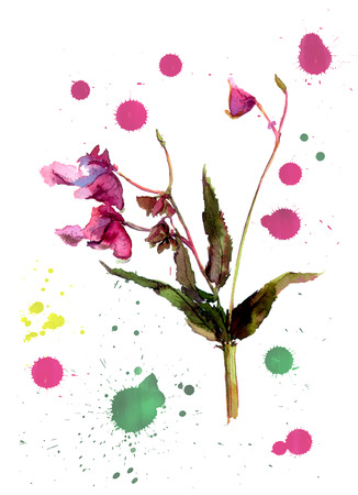balsam: One flower with white background and color drops, watercolor Stock Photo
