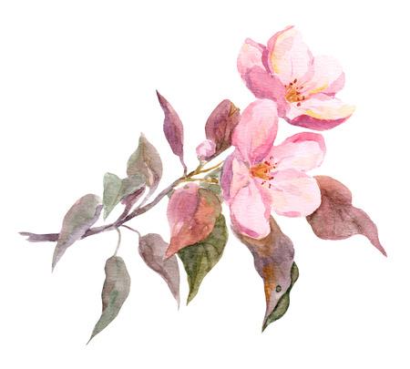 Roze appelboom bloem. Aquarel hand geschilderd beeld