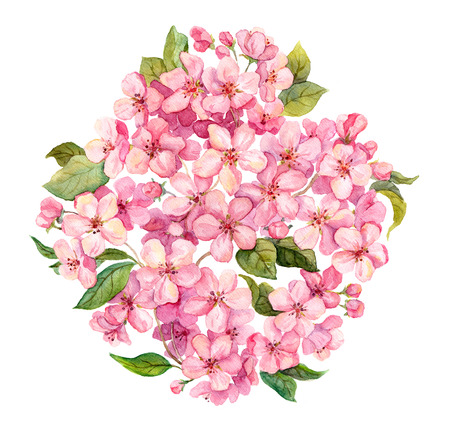 circle flower: Pink spring flowers - sakura, apple flowers blossom, white background. Watercolor and handmade Stock Photo