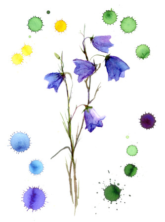 bell flower: Blue bell flower isolated, watercolor and handmade