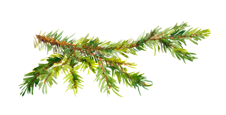 Watercolor painted pine branch one isolated, handmade