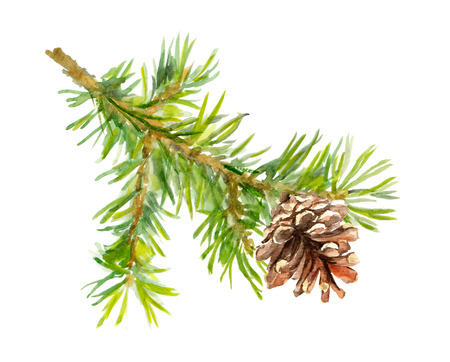 aquarel: Watercolor painted pine branch one isolated, handmade