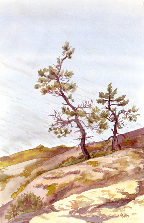 mere: Watercolor Nordic landscape  - pine trees in stones near ocean