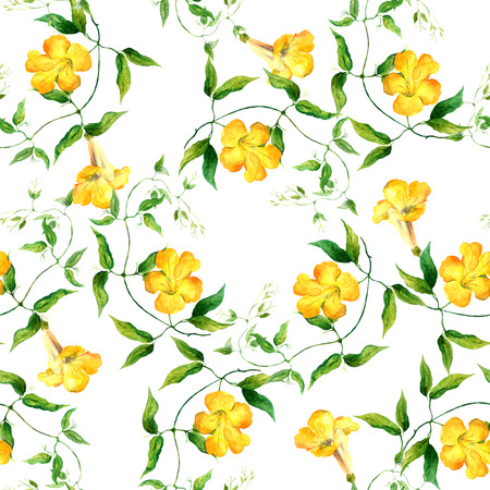 yellow art: Yellow flower bindweed. Repeating floral pattern. Watercolour background