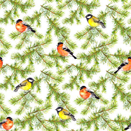 chickadee: Watercolor hand painted seamless repaeting pattern with birds in pine branches Stock Photo