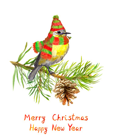 pine tree branch: Cute winter bird in hat and scarf on pine tree branch. New year, Christmas greeting card Stock Photo