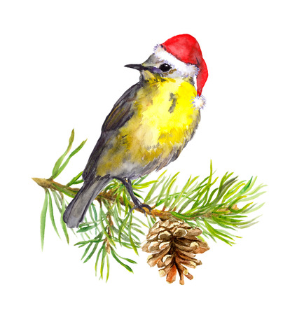 Cute winter bird in hat on pine tree branch. New year, Christmas greeting card