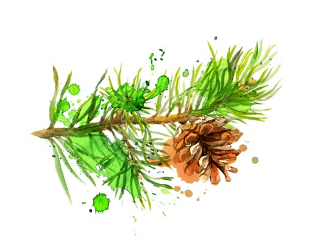 pine green: Fir tree branch and pine cone in art design. Watercolor isolated