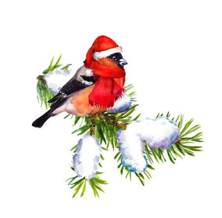 christmas watercolor: Vintage greeting card with retro painted bullfinch